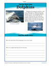 external image dolphins-main-idea-100x129.png