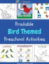 Birds Preschool Theme Activities